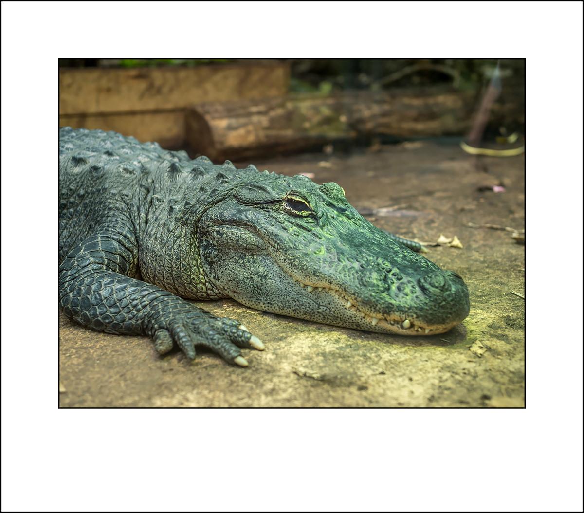 Beauval Zoo