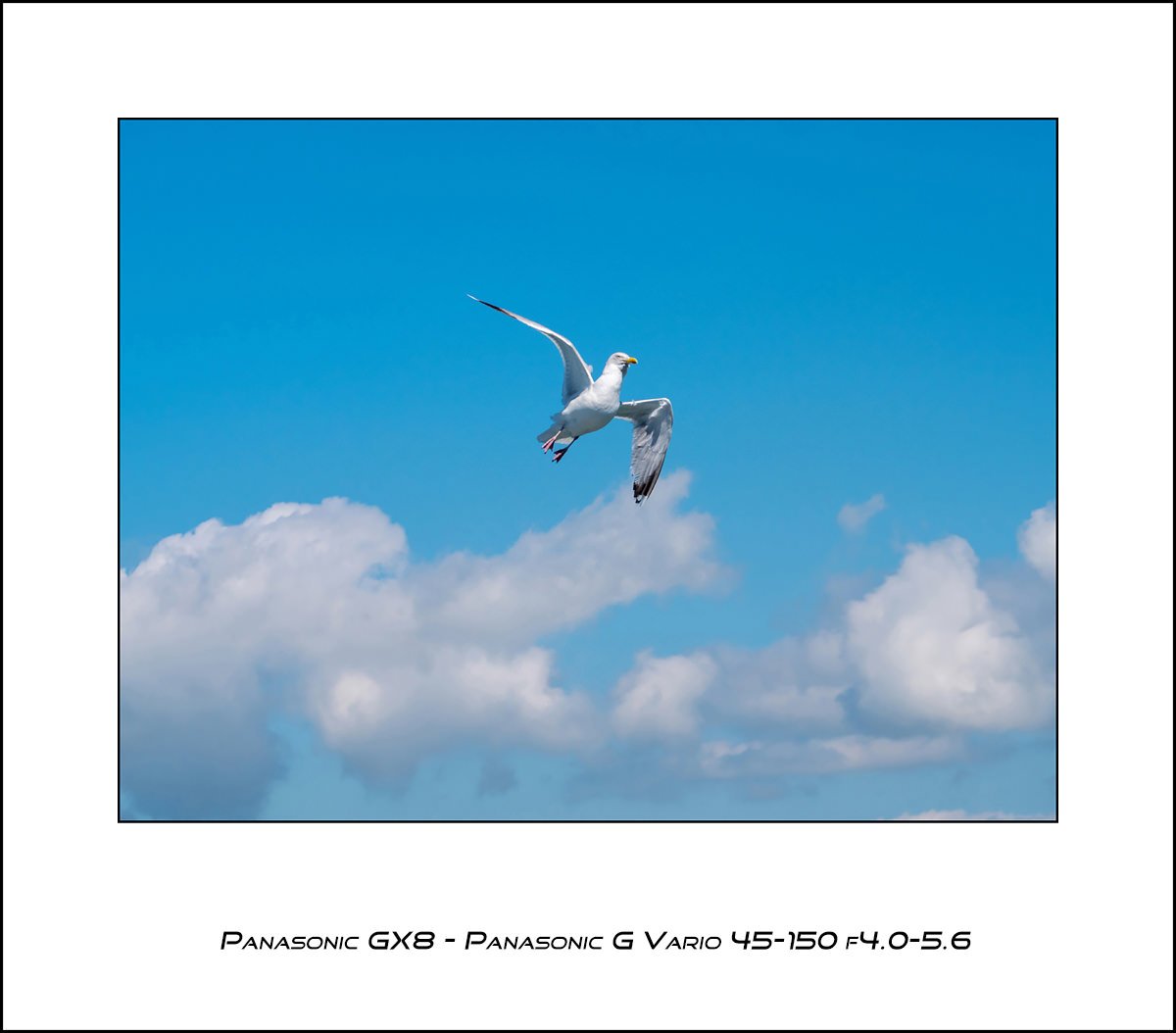 Panasonic GX8 - Panasonic 45-150 f4.0-5.6