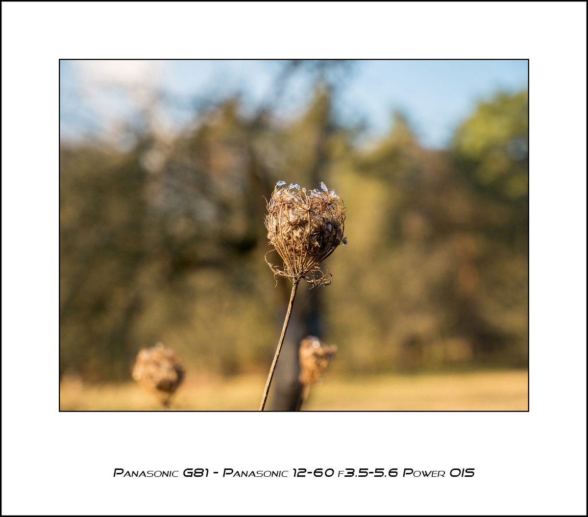 Panasonic G81 - Panasonic 12-60 f3.5-5.6 Power OIS